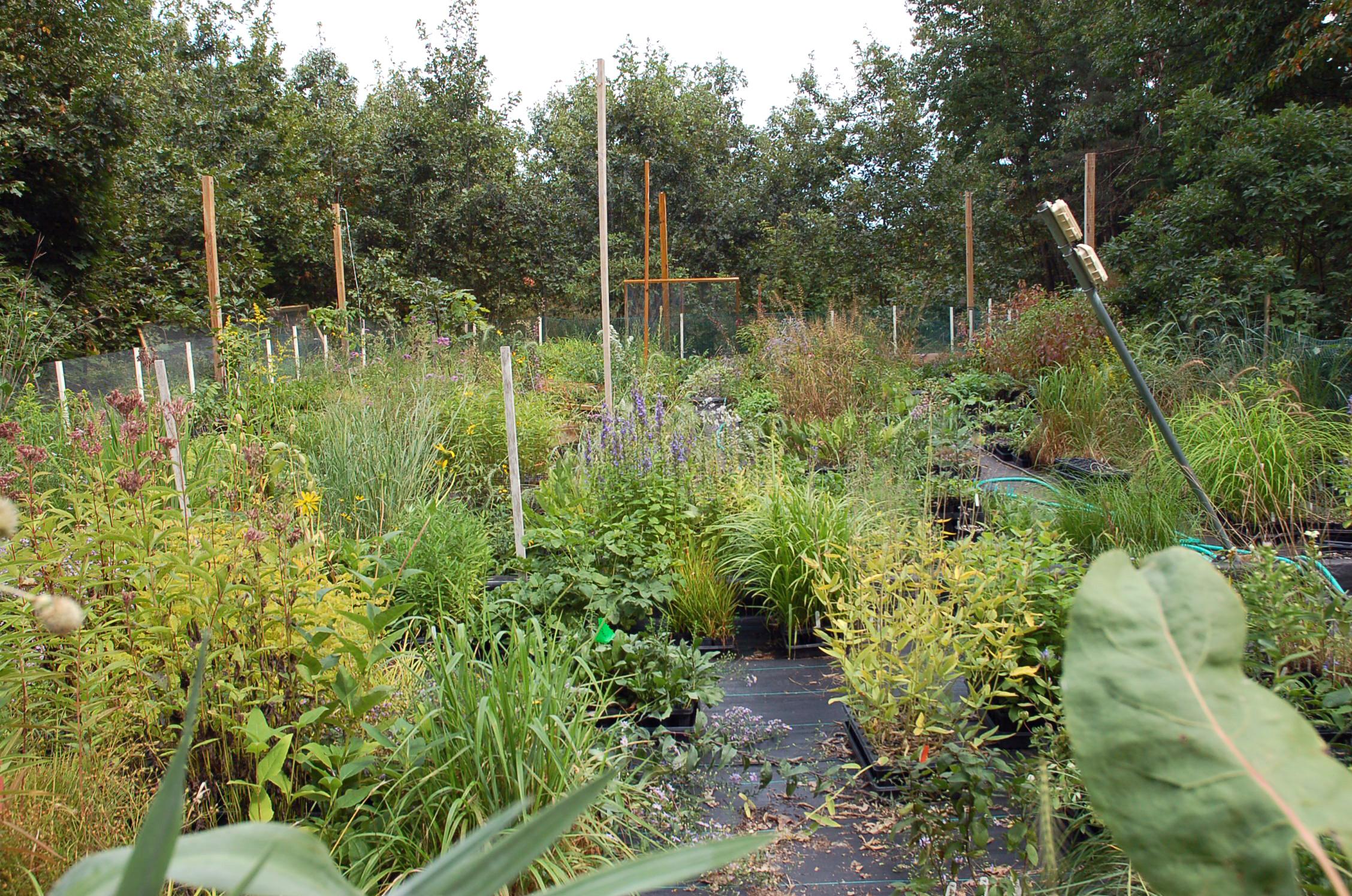 Hidden Savanna Nursery Van Kal Permaculture