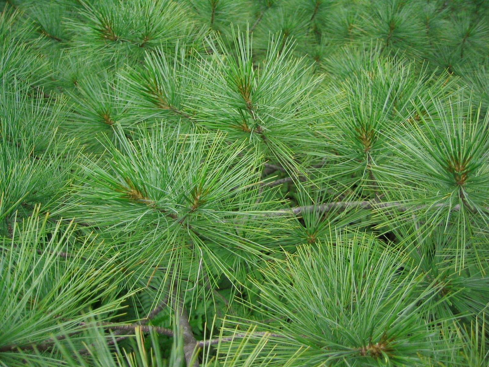 Allegan Conservation District Tree Sale Van Kal Permaculture