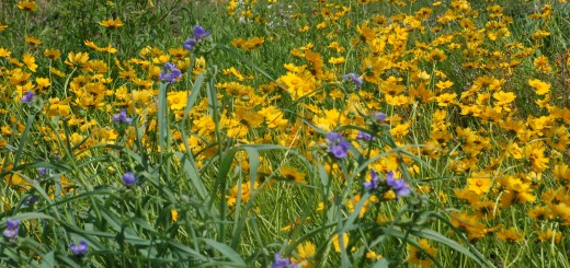 Native Wildflowers