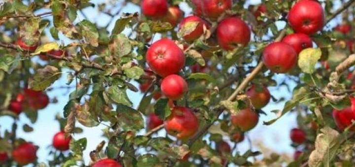 Grandpa's Orchard