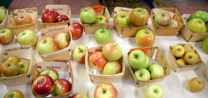Spirit Springs Apples