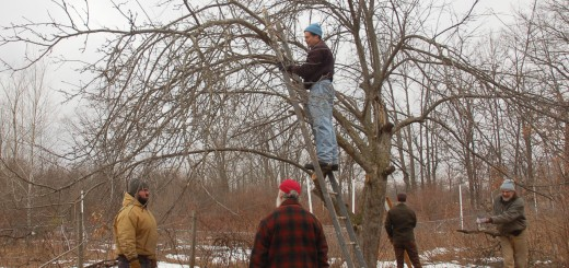 Tree Pruning at Rachelle's