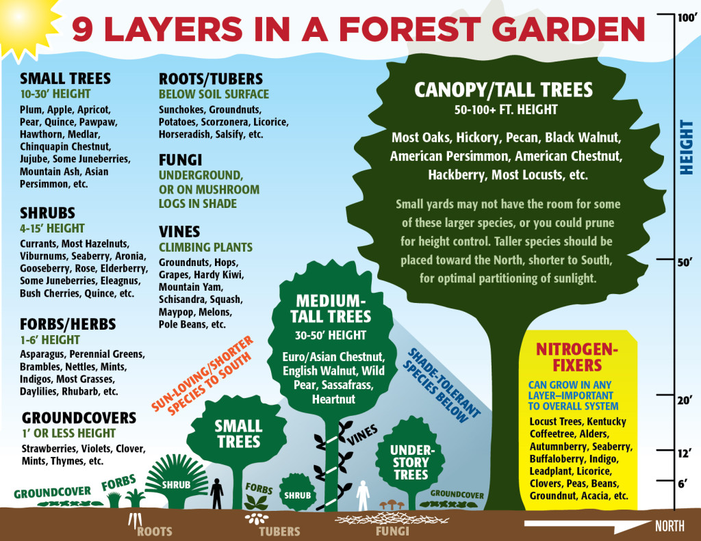 9 Layers in a Forest Garden, graphic by PJ Chmiel