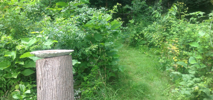 Forest Garden Tours
