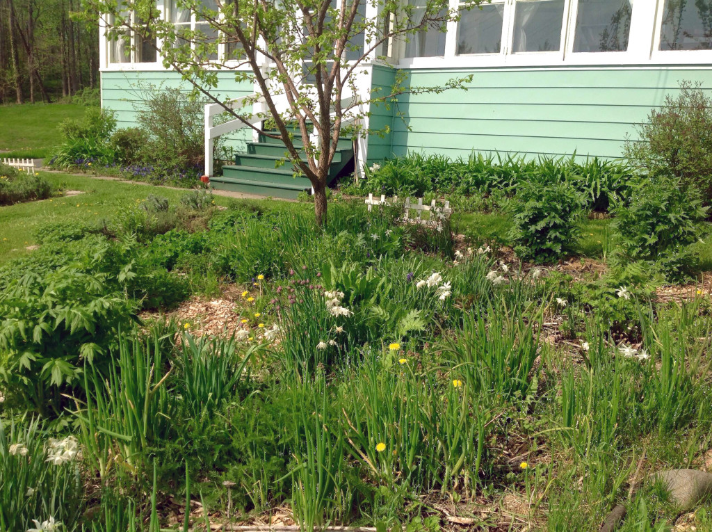 Front yard polyculture at Lillie House